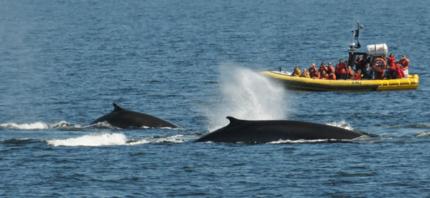 Croisière baleine